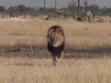 Zimbabue pide la extradición del cazador del león Cecil