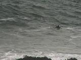 De campeón de surf a guardián del mar