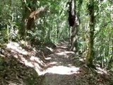 Tala masiva en reserva de Honduras por plaga