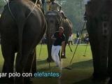 Los elefantes también juegan polo