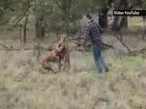 Un australiano golpea a un canguro para salvar a su perro
