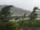 Ciclón Debbie barre la costa noreste de Australia
