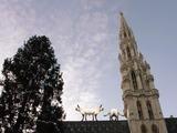 Usan gatos para atraer turistas a Bruselas