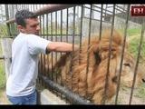 Javier y Simba: Amistad entre garras  Mi gran amigo es un León