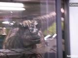 Video viral de hoy :  Dinosaurio ataca en estacionamiento de centro comercial