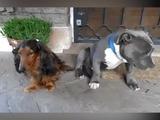 Cachorros son confrontados por su dueño luego de travesura