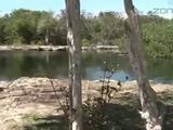 A esta laguna se metió hondureño atacado por cocodrilo