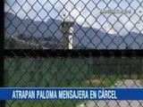 Paloma es capturada mientras intentaba ingresar un celular y una USB a un penal colombiano