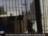 Un león atacó a su domador durante un espectáculo en un circo
