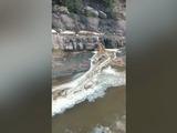 Honduras: Masiva muerte de peces en caudaloso río de Esquías