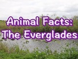 Going to visit your grandparents in Florida this winter? Check out this interesting video about the Florida Everglades!